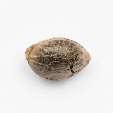 Seeds_Detail_0027_Ak-49-1-768x576